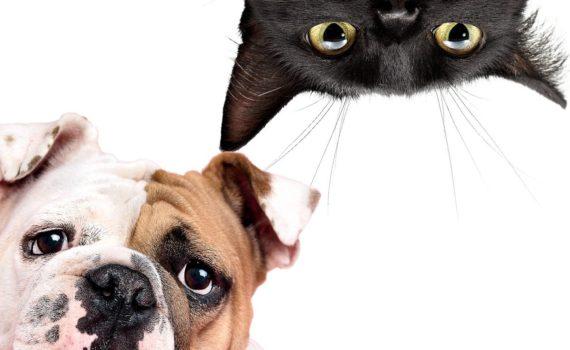 shampo per cani e gatti