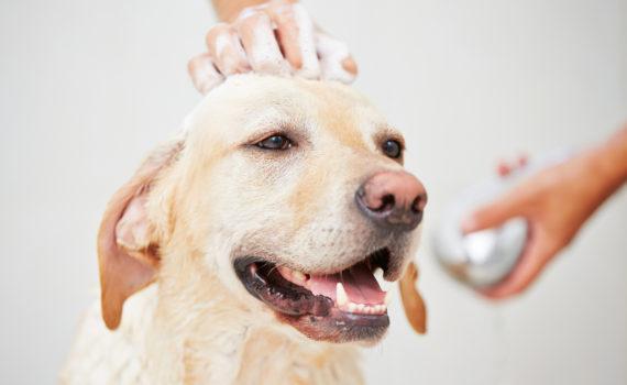 Shampoo per animali a pelo bianco