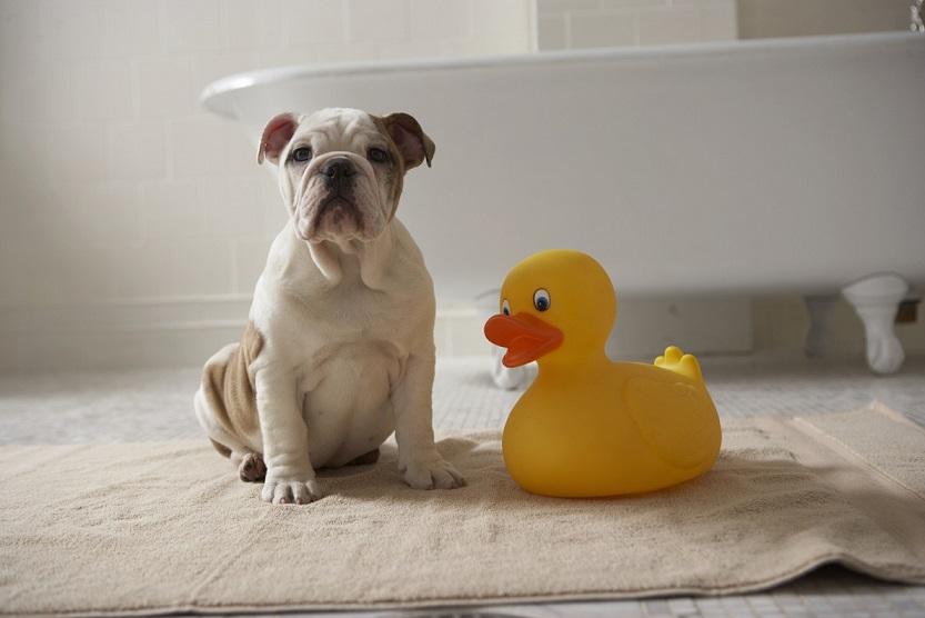 shampoo a secco per cani e gatti