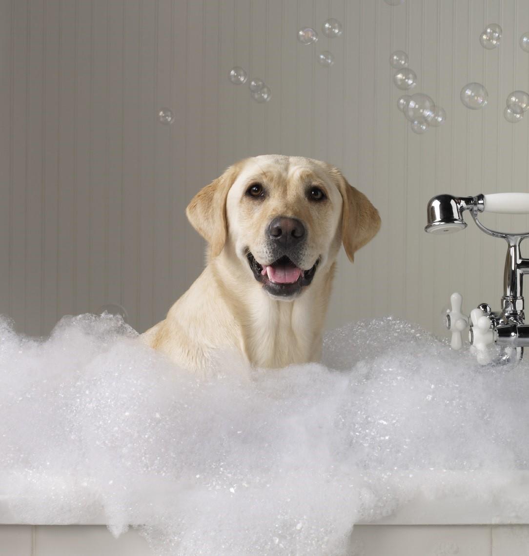shampoo con balsamo per animali